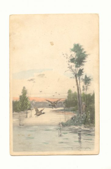 MALLARDS FLYING OVER MARSH VINTAGE 1908 POSTCARD    #452
