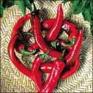Organic Hot Portugal Pepper Seeds 25 Count