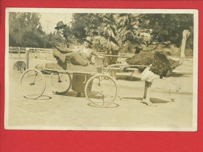 RPPC LOS ANGELES OSTRICH FARM WAGON CALIFORNIA MAN WOMAN 1921 RP POSTCARD
