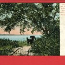 HALIFAX RIVER SANDY ROADS HORSE BUGGY FLORIDA POSTCARD