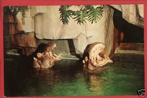 MILWAUKEE WI ZOO HIPPOPOTAMUS ZOOLOGICAL PARK  POSTCARD