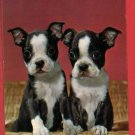 PEWAUKEE WI PUPPIES DOGS IN BASKET GREETINGS POSTCARD