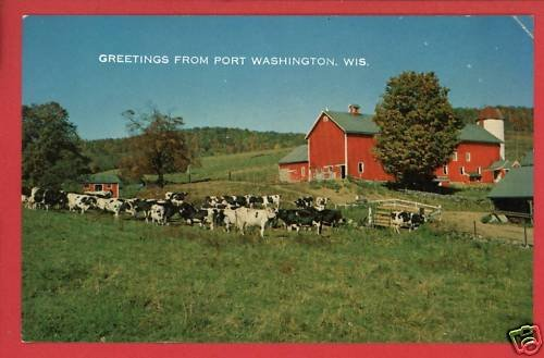 PORT WASHINGTON WI WISCONSIN GREETINGS COWS  POSTCARD