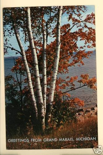 GRAND MARAIS MI MICHIGAN GREETINGS FROM BIRCH  POSTCARD