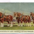 BUDWEISER EIGHT HORSE HITCH ST LOUIS MO  LONG POSTCARD