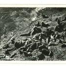 RPPC SEA LIONS AT PLAY  OREGON COAST HIGHWAY 1953 RPPC