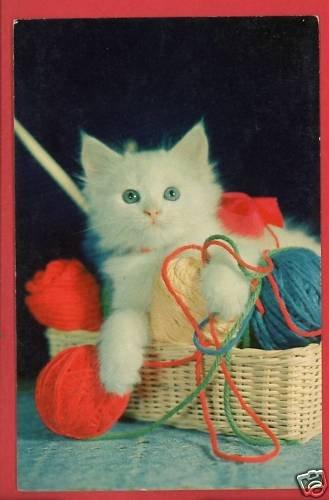 WHITE KITTEN BASKET W/ YARN CAT CATS KITTENS POSTCARD