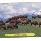GARDINER MT MONTANA GREETINGS FROM BUFFALO POSTCARD