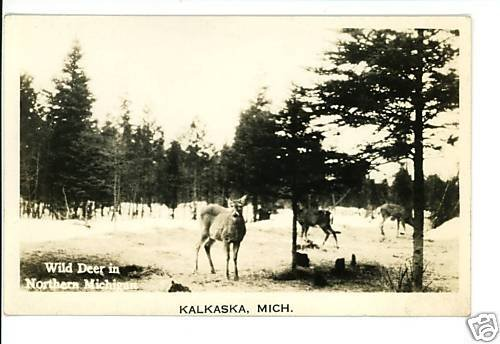 KALKASKA MICHIGAN MI REAL PHOTO POSTCARD WILD DEER RPPC