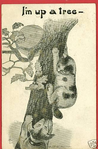 CAT DOG UP A TREE MOON PHILLIPS ARTIST SIGNED POSTCARD