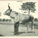 LONE STAR COW MAULSBY SAN ANTONIO TEXAS TX   POSTCARD