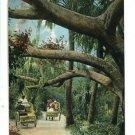PALM BEACH FL FLORIDA JUNGLE TRAIL CART RIDE POSTCARD