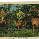 BEULAH MI MICHIGAN GREETINGS FROM 1952  POSTCARD