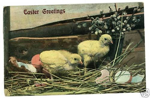 EASTER CHICKS EGGS WOOD BOX PUSSY WILLOW POSTCARD