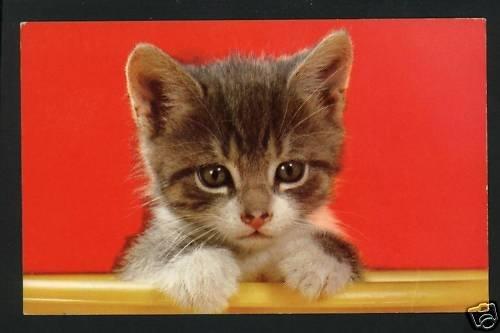 CUTE KITTEN IN YELLOW BOWL  POSTCARD