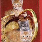 KITTENS PLAYING IN BASKET  KITTEN CAT CATS POSTCARD