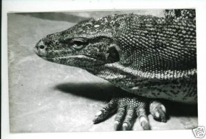 RPPC GILA MONSTER  A CUMMINGS PHOTO RP POSTCARD