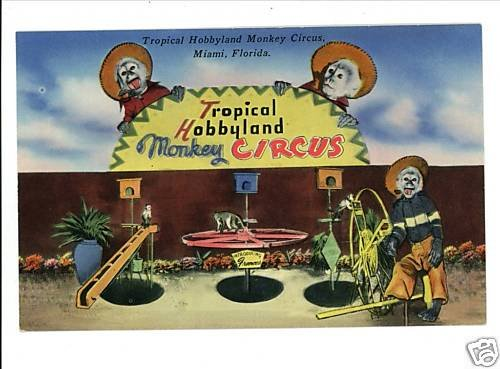 MIAMI FLORIDA MONKEY CIRCUS TROPICAL HOBBYLAND POSTCARD