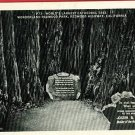 REDWOOD HIGHWAY CALIFORNIA CATHEDRAL TREE '40  POSTCARD