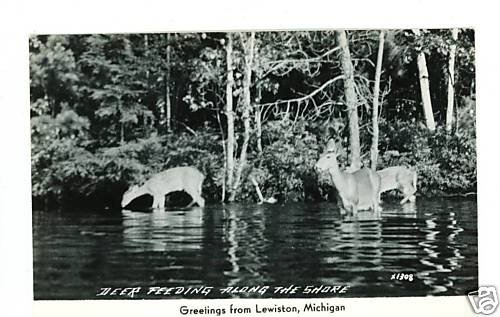 RPPC LEWISTON MICHIGAN GREETINGS DEER ALONG SHORE
