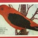 SCARLET TANAGER BIRD DAIRY FARMER MEREDITH PUB POSTCARD