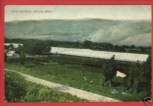 HELENA MT MONTANA STATE NURSERY 1907 CUT BANK POSTCARD