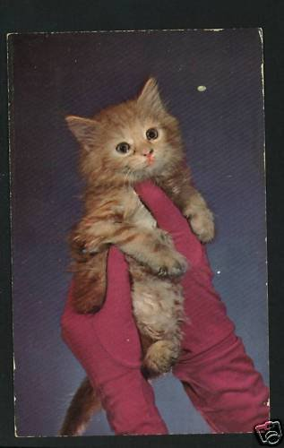 KITTEN BEING HELD BY GLOVED HANDS 1955 GLAMOUR POSTCARD