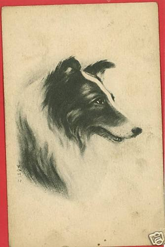 COLLIE DOG ARTIST SIGNED V O H H  POSTCARD