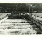 RPPC FISH LADDER BONNEVILLE DAM OREGON OR SAWYERS 1949