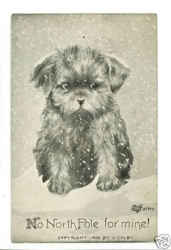 V COLBY DOG PUPPY SNOW NORTH POLE 1909 A/S  POSTCARD