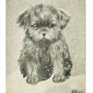 V COLBY DOG PUPPY SNOW NORTH POLE 1909 A/S  POSTCARD