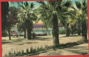 WINTER PARK FLORIDA LAKE IN PARK HAND COLORED POSTCARD