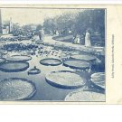 LINCOLN PARK CHICAGO LILLY POND VINTAGE POSTCARD