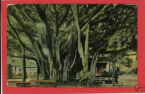 HONOLULU HAWAII BANYAN TREE EARLY POSTCARD