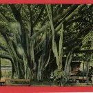 HONOLULU HAWAII BANYAN TREE EARLY POSTCARD