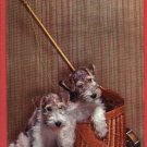 TWO SCHNAUZER PUPPIES DOGS FISHING POLE BASKET POSTCARD