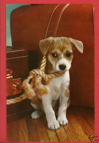BEAGLE  PUPPY DOG WITH ROPE LEASH  & SUITCASE  POSTCARD