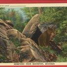 BEAVERTON MI MICHIGAN GREETINGS FROM BEAR   POSTCARD
