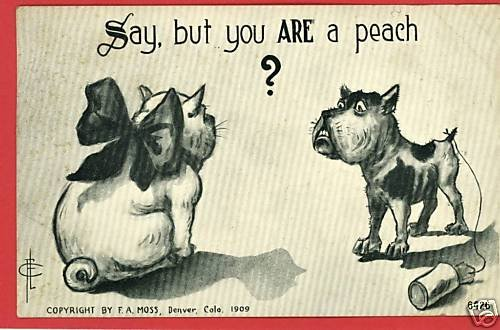 DOG CAT PEACH FLC ARTIST SIGNED MOSS 1909  POSTCARD