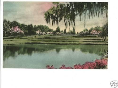 Charleston SC Middleton Place - Hand-Colored Postcard
