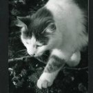 RPPC  CAT WALKING  A CUMMINGS PHOTO RP POSTCARD