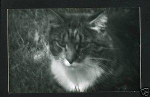 RPPC TIGER CAT SHADOWS B  A CUMMINGS PHOTO RP POSTCARD