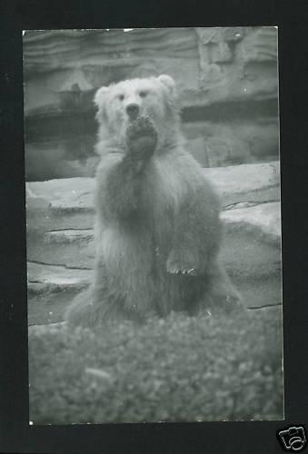 RPPC GRIZZLY BEAR  A CUMMINGS PHOTO RP POSTCARD