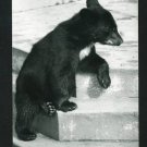RPPC BLACK BEAR ON STEPS  A CUMMINGS PHOTO RP POSTCARD