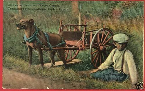 DOG & CART TRANSPORT QUEBEC CANADA BOY  POSTCARD