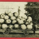 RPPC EXAGGERATION WAGON LOAD APPLES MULES 1909 MARTIN