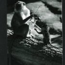 RPPC MONKEY W/ BABY MONKEY A CUMMINGS PHOTO RP POSTCARD
