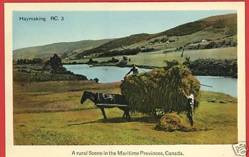 HAYMAKING MARITIME PROVINCES CANADA HORSE CART POSTCARD