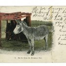 DONKEY BURRO BE IT EVER SO HUMBLE THAYER   POSTCARD