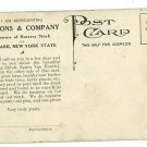 NEWARK NEW YORK EMMON & CO NURSERY ADVERTISING POSTCARD